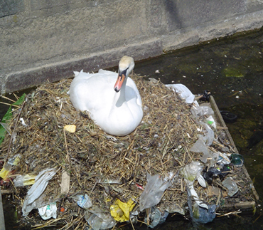 goose sitting on trash